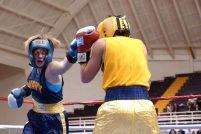 boxers-652379__340